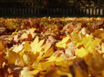 Every week Boise picks up and composts leaves