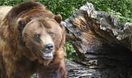 East Idaho Hiker Survives Grizzly Bear Attack