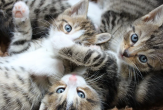 Sixty-five Cats Removed from a Nampa Residence