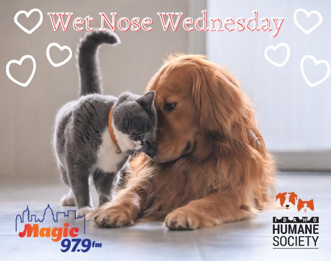 Wet Nose Wednesday