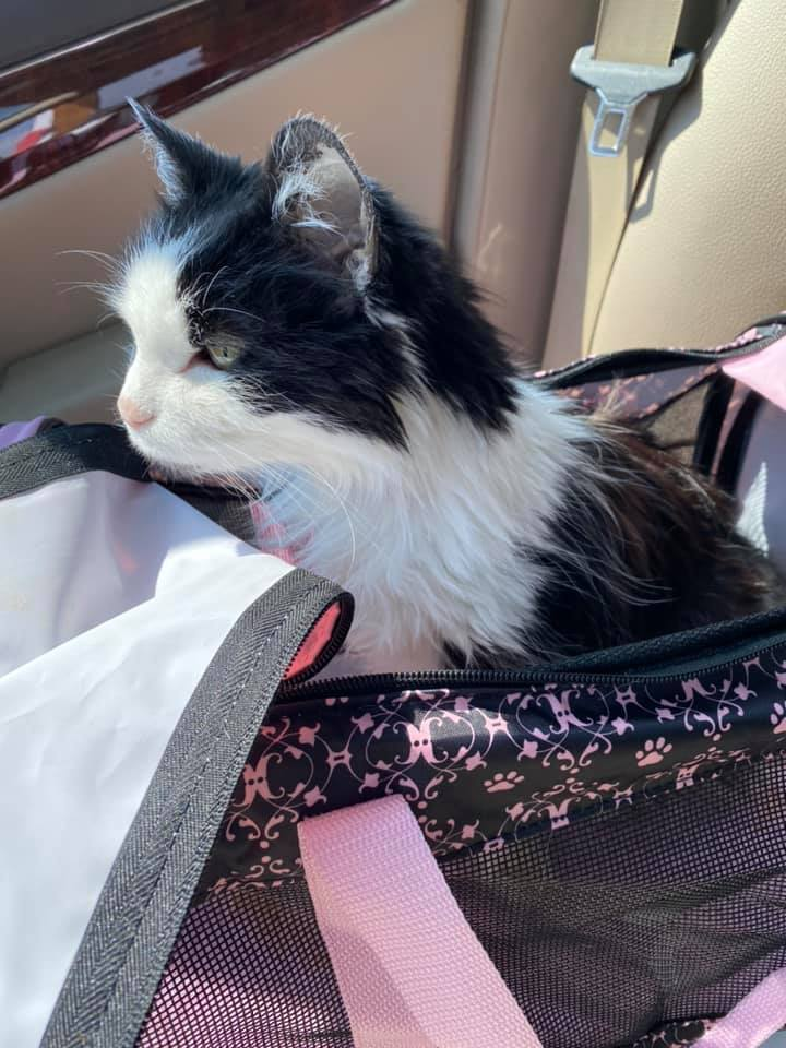 Phoebe Goes On A Car Ride