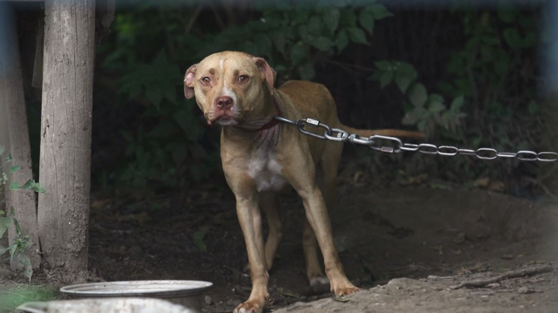 Governor Abbott Roasted As Dog Hater For Vetoing Animal Cruelty Bill