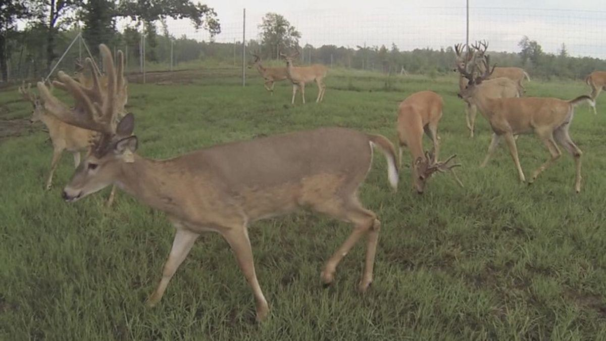 Deer Season Means Extra Caution When Driving