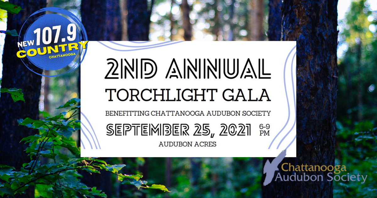 The 2nd Annual Torchlight Gala