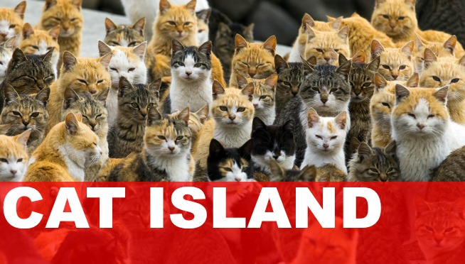 VIDEO: AN ISLAND TAKEN OVER BY CATS
