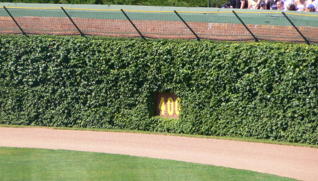 Cubs Selling 2,016 Leaves From Wrigley Field Ivy