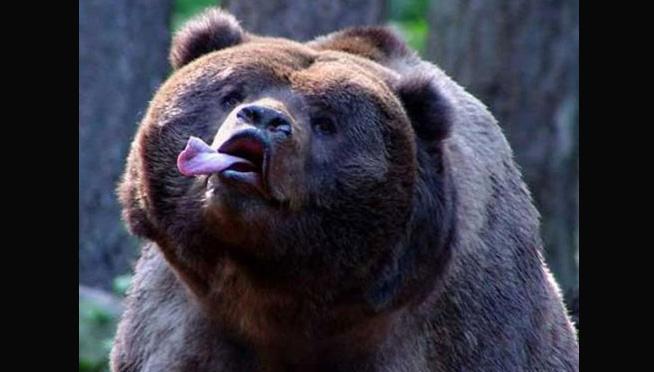 101WKQX: Listen to Eddie Vedder's akward preview of Bears/Lions