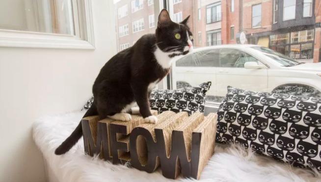 Chicago Cat Cafe Alert: Bucktown's Windy Kitty is Open