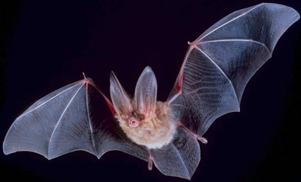 BATS! Swarm of bats cling to wall outside office window