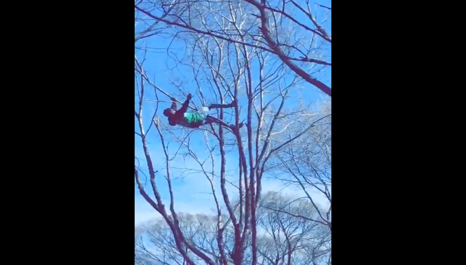 VIDEO: Do not drink and climb a tree in Grant Park