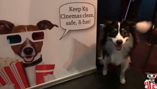 Wait, Dogs can go to the movies with you now?!