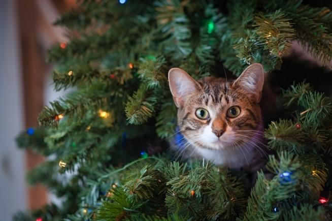 6 minutes of cats ruining Christmas trees