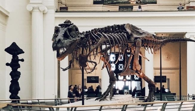The Field Museum for FREE!