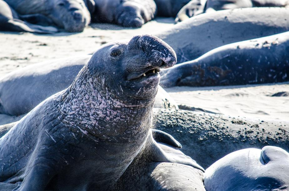 Actual seals sing 'Kiss From a Rose'