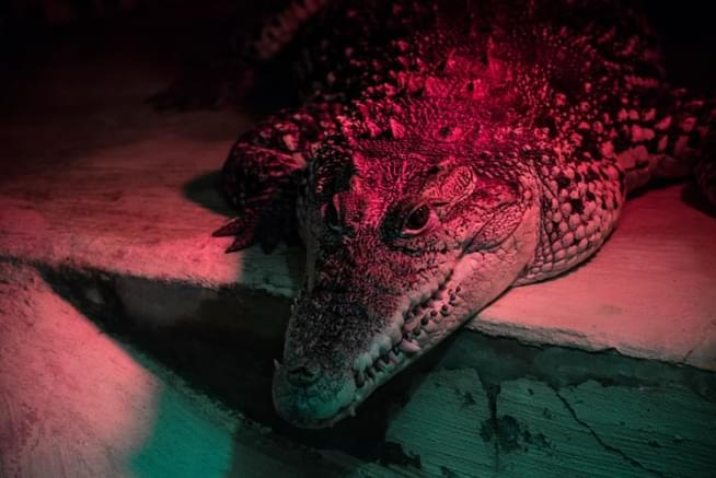 Florida man fights alligator to save his dog