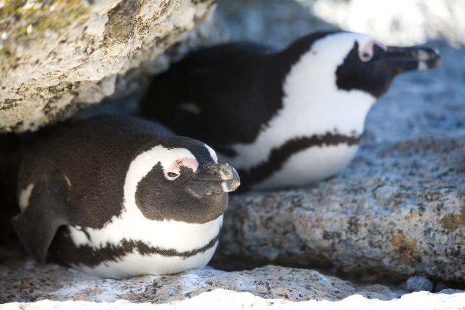 Shedd Aquarium penguins go on another field trip!