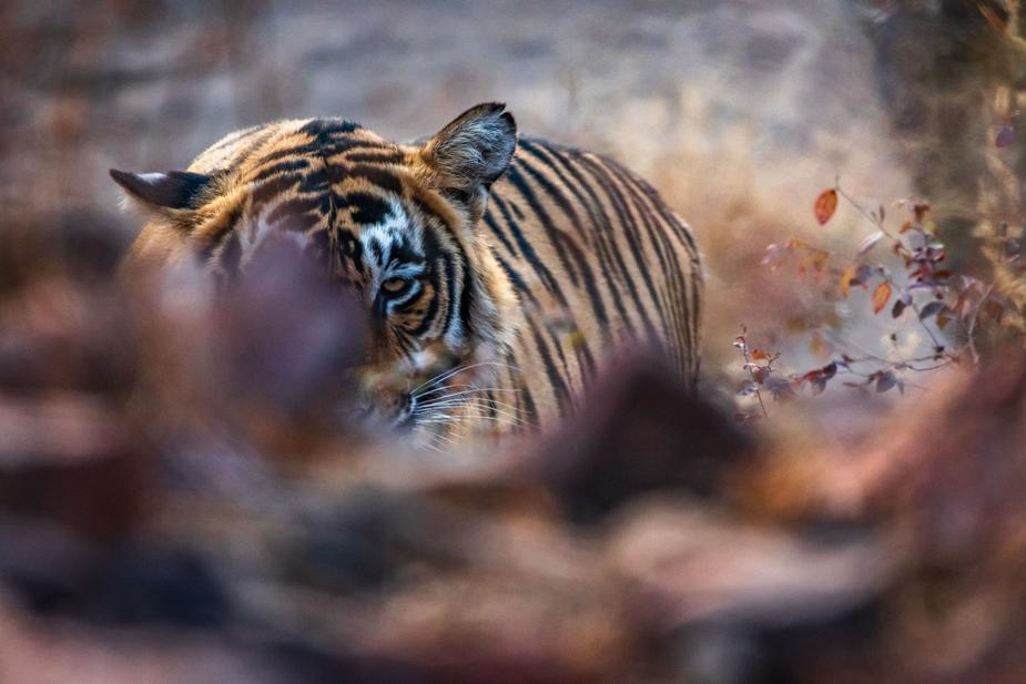 Tiger King zoo to be shut down for good