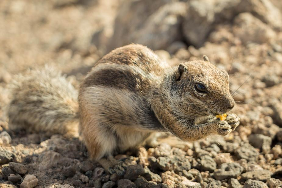 Chick Got This Chipmunk Trained To Listen To Her Commands On The Spot!