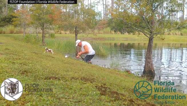 Watch Florida man save his puppy from an alligator