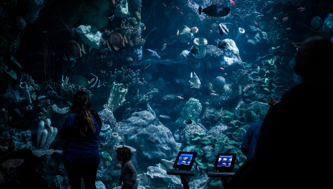 Free days at the Shedd coming to wrap up February