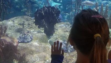Shedd Aquarium announces free resident days in August