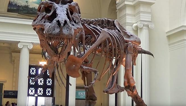 Illinois residents get into the Field Museum free on Voting Day