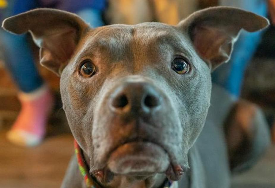 PAWS Chicago is waving adoption fees for pets over 1-year-old for a full week