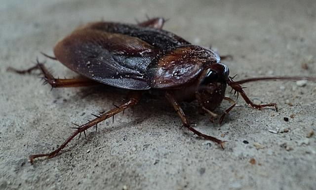 Name a cockroach after your ex for Valentine's Day!