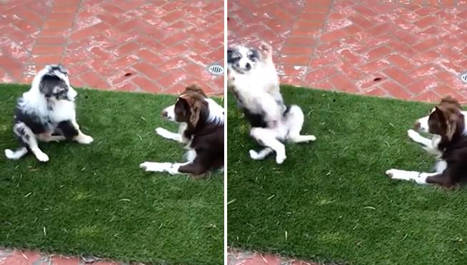 WATCH How this puppy reacts to meeting his cousin for the first time