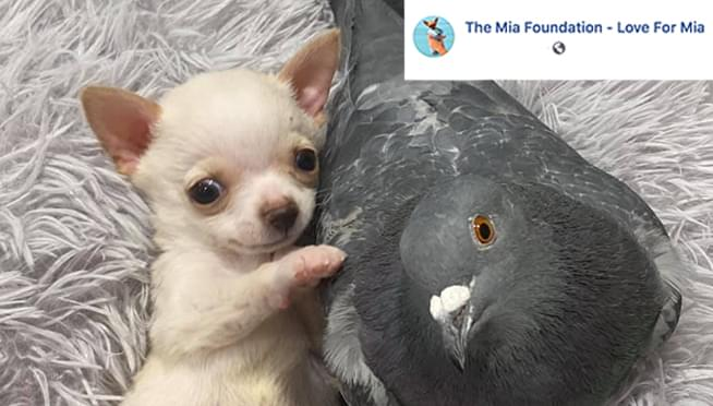 A puppy that can't walk befriended a pigeon that can't fly at an animal shelter