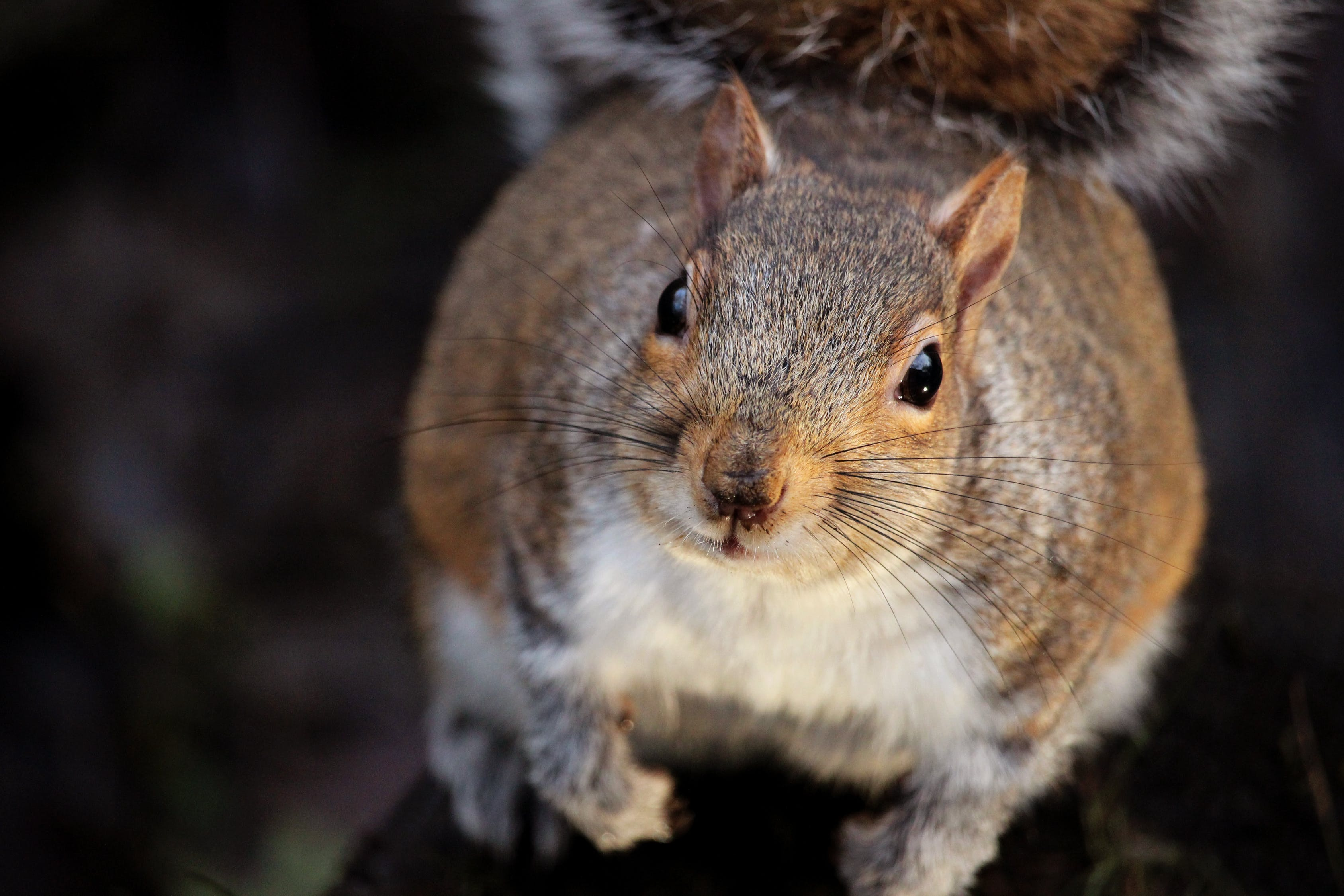 Squirrel caught on camera stealing two slices of pizza from box left on porch