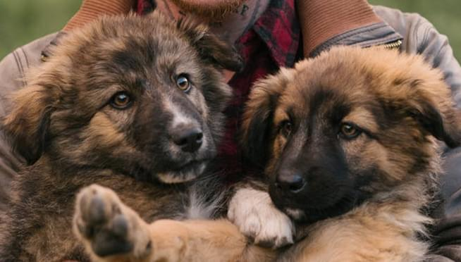 Elton John shares picture of his two new German Shepherd puppies