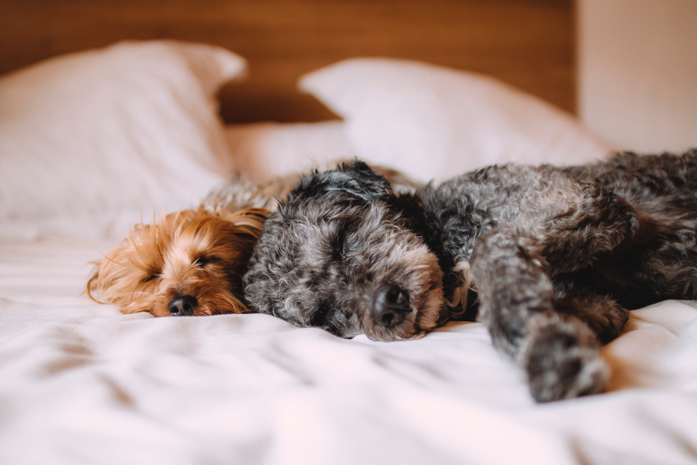 Nearly 75% of dog owners let their pets sleep on the bed with them