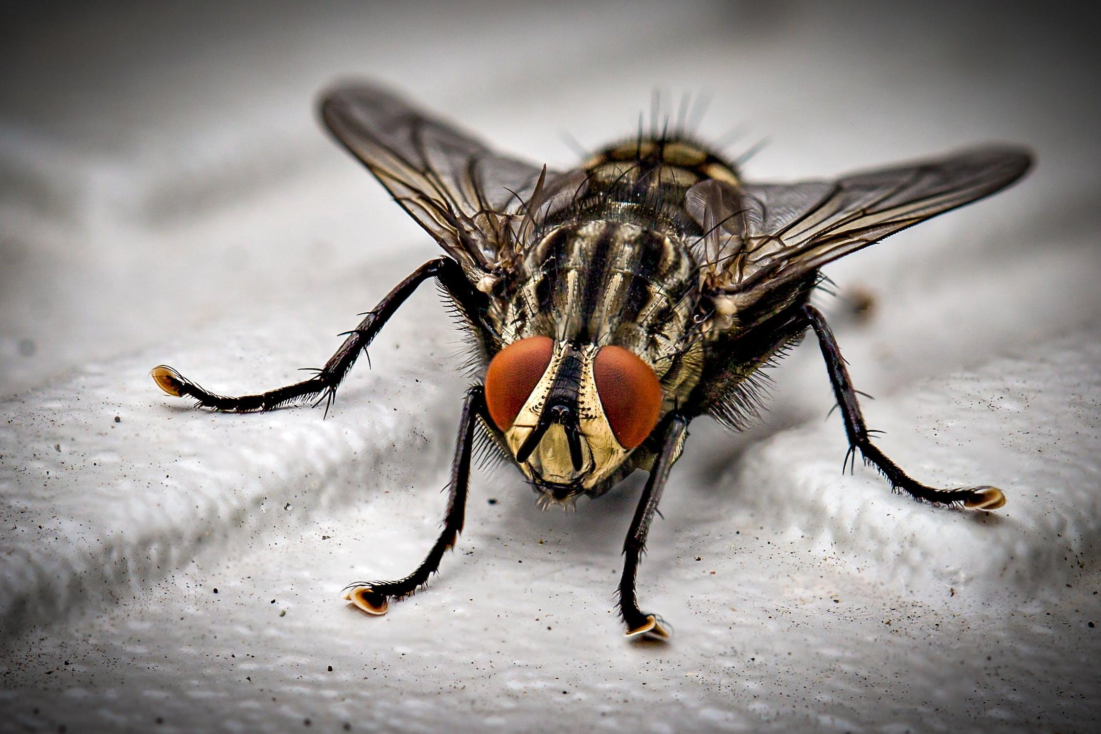Man blew up his house trying to kill a fly
