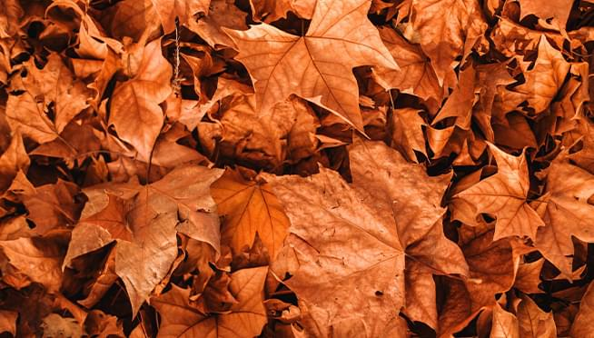 Songs for fall – Here's 10 great autumn songs