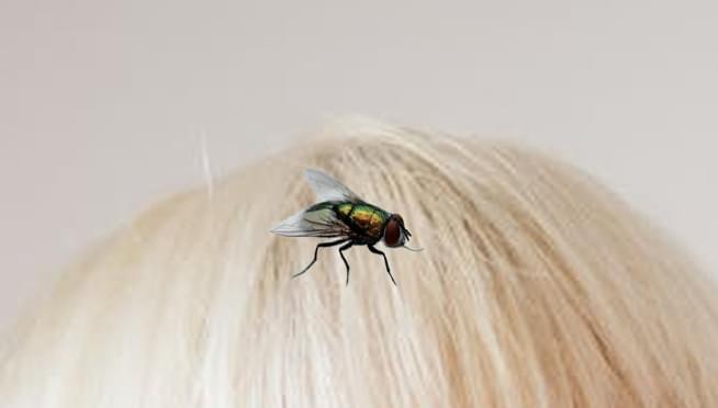 Halloween store selling 'debate fly wig'