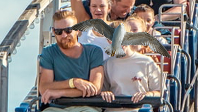 Watch: Seagull smacks into screaming teenager's face on amusement park ride