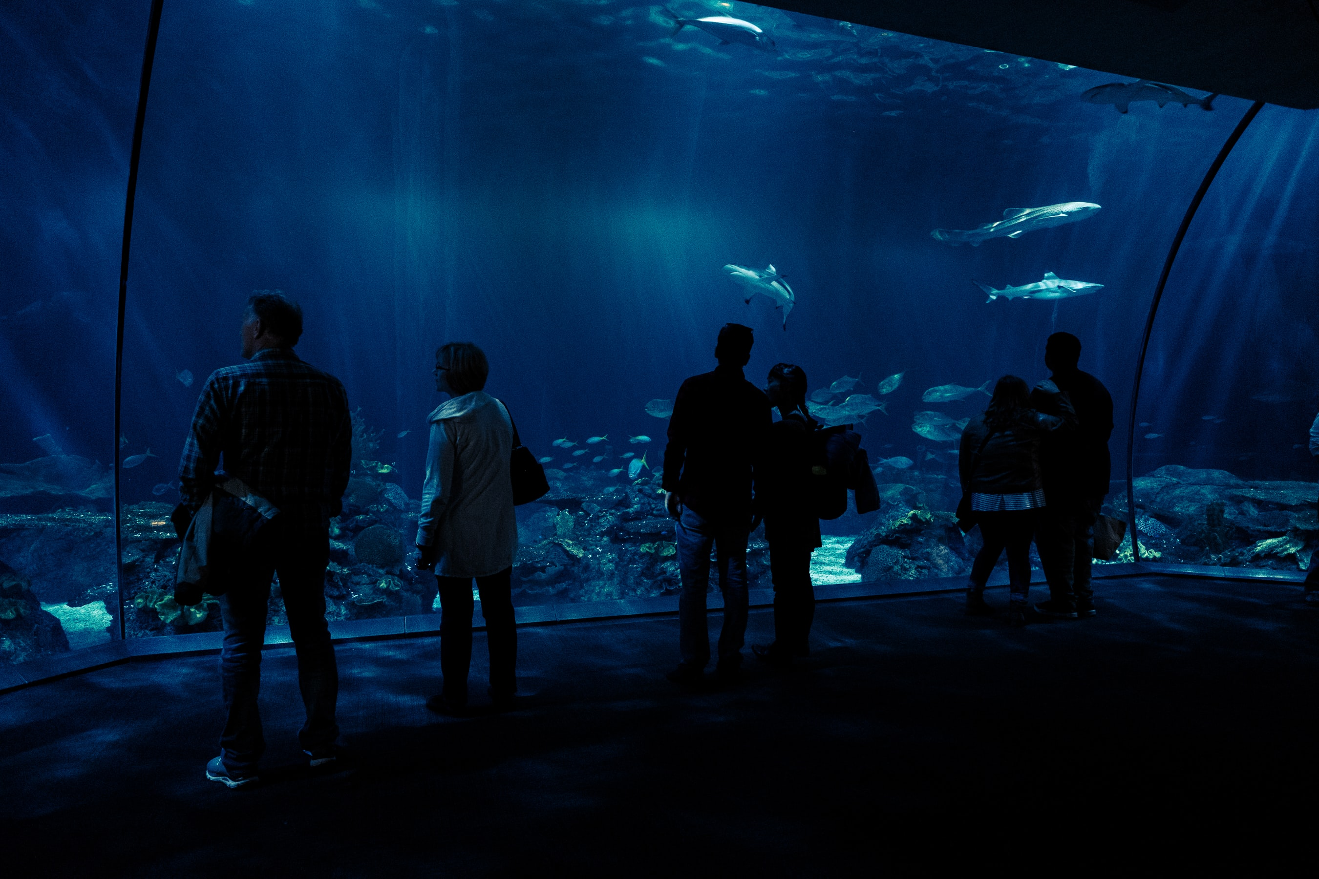 Mondays, Tuesdays and Wednesdays are free days at the Shedd Aquarium in September