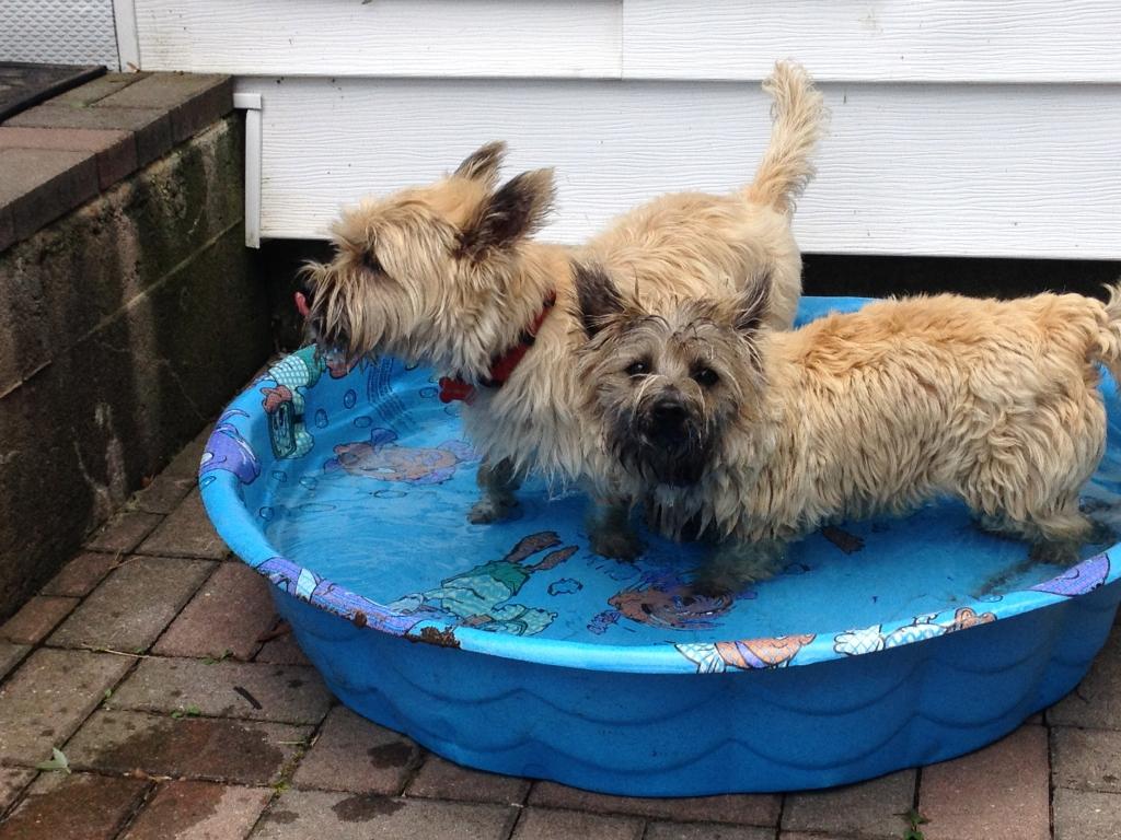 104 - Benji & Zoey