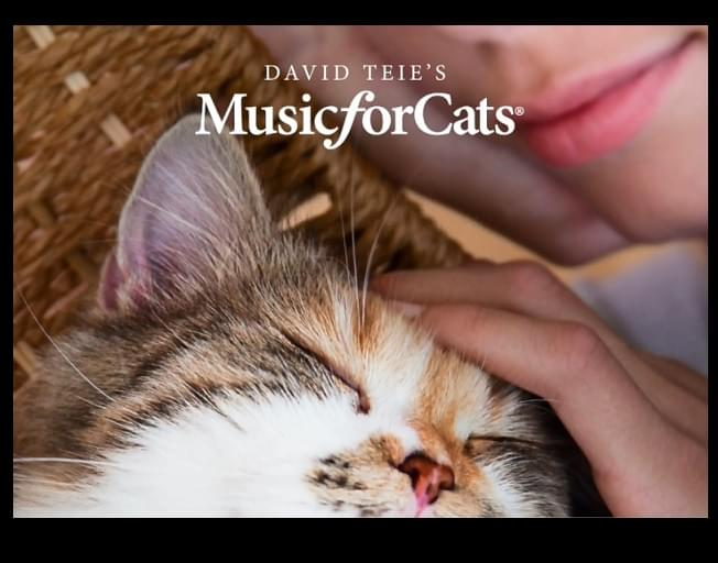 THE PERFECT MUSIC FOR CALMING CATS