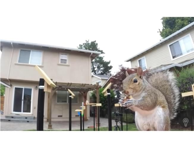 Squirrels Have To Beat A Ninja Warrior Like Course Thanks To This NASA Engineer
