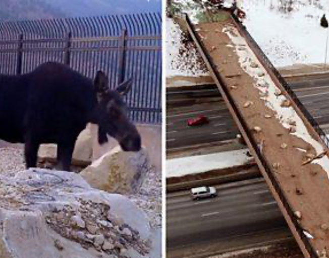 Utah's First Wildlife Bridge Is A Hit-And They Have Video To Prove It
