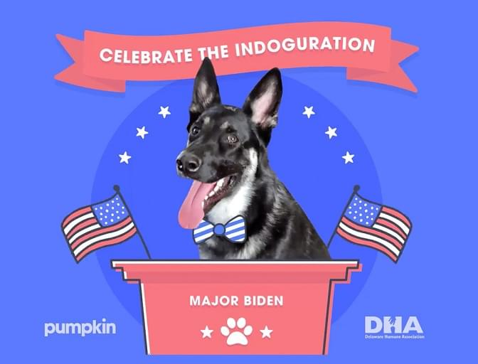 "Biden's German Shepherd Getting ""INDOGURATION"""