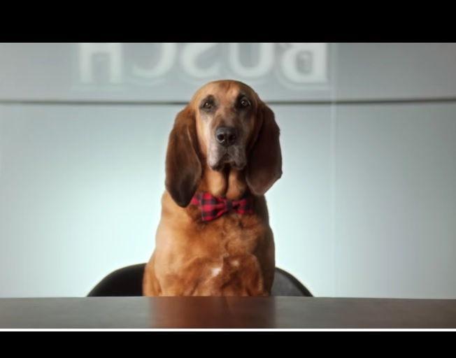 Anheuser-Busch Could Pay Your Dog To Taste Test Busch Dog Brew [VIDEO]
