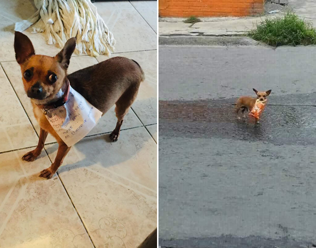 Self-Isolating Man Sends His Dog Out For Cheetos