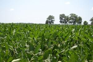 Cash crops more than two-thirds good to excellent condition in latest crop report