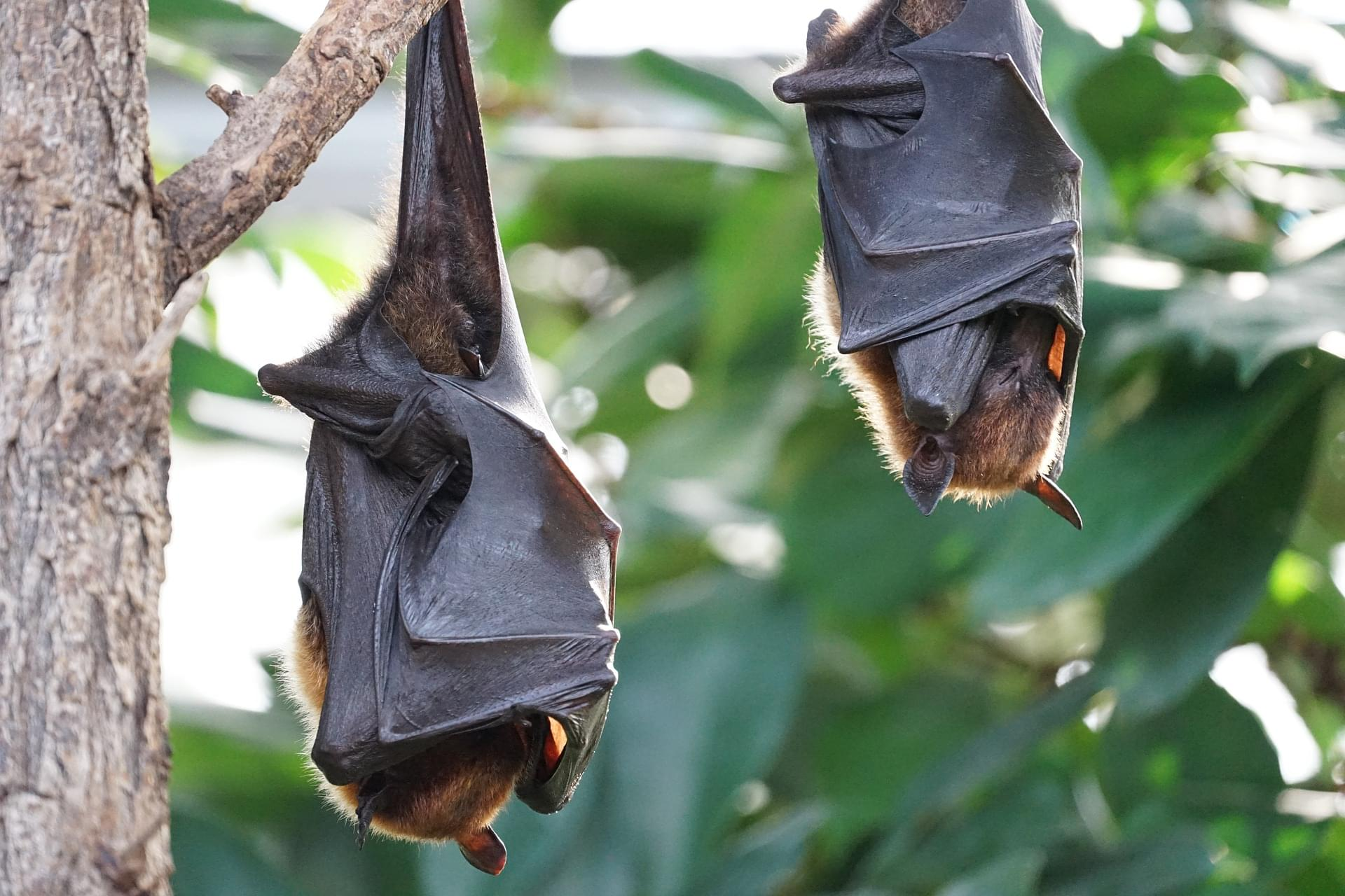Pacers bat