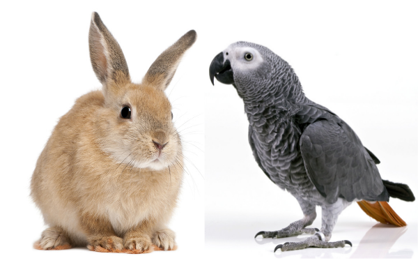 Bird or Rabbit