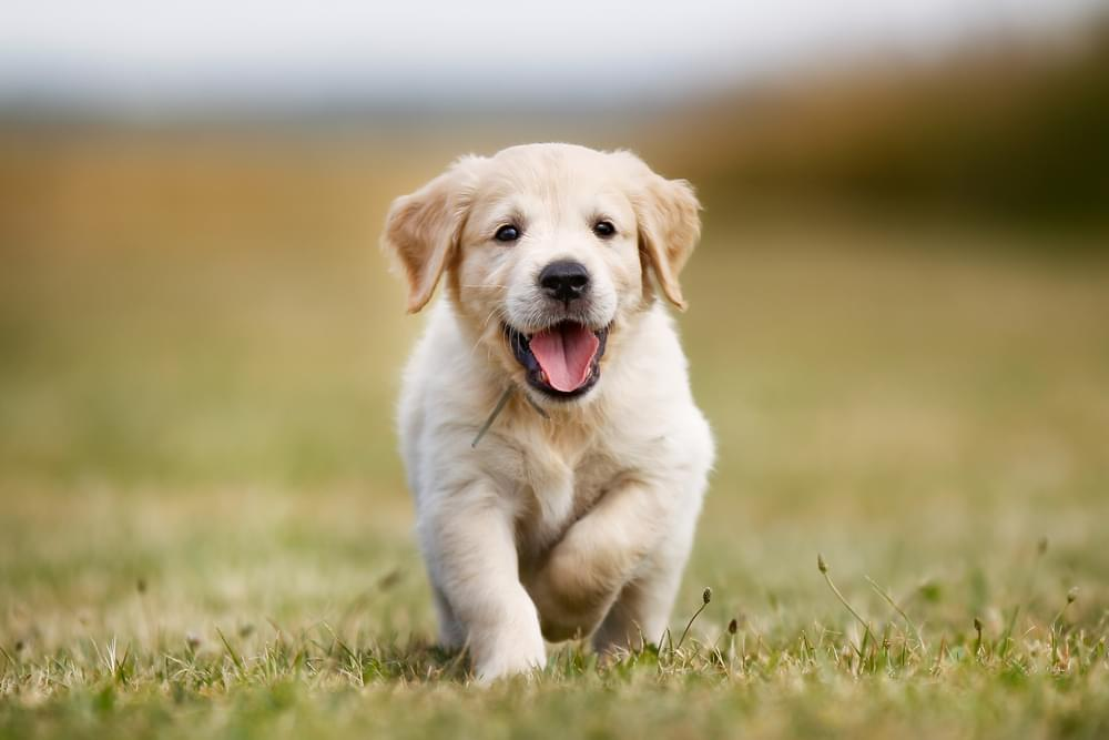 According to Science, These Are The Cutest Dog Breeds