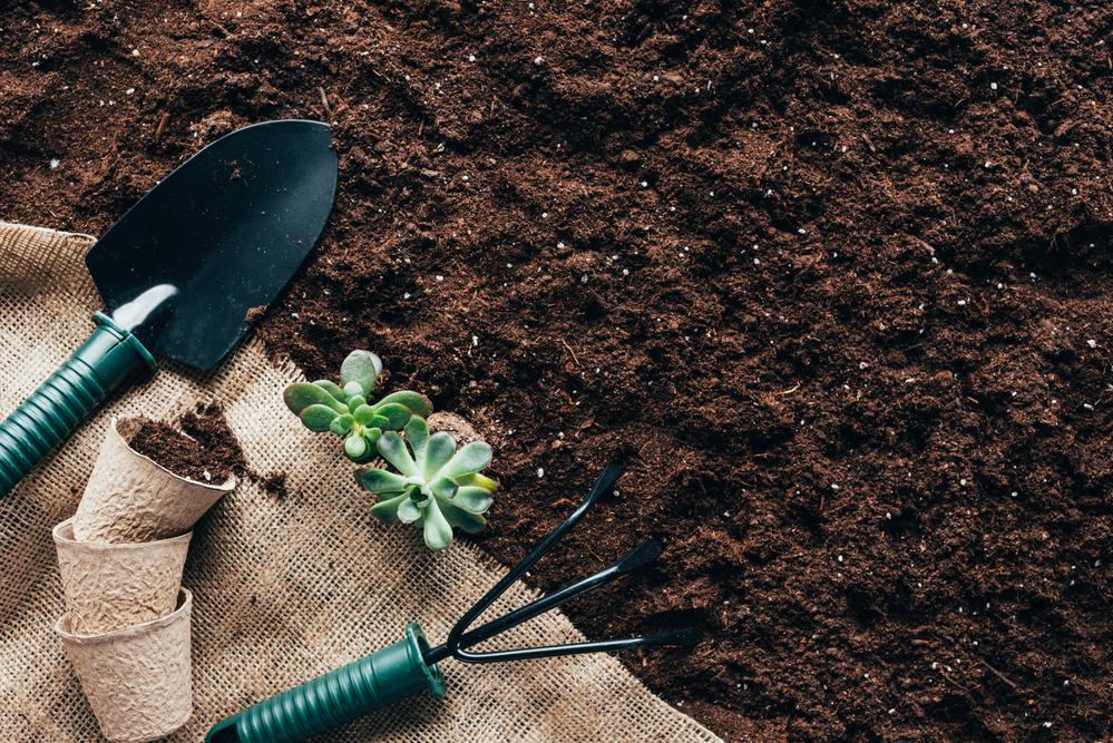 Lowe's Is Offering Free Garden Kits In April